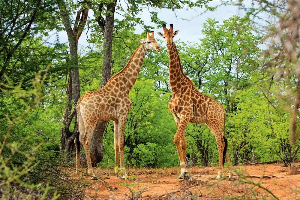 AAM-AAES79270. Parque Nacional Kruger