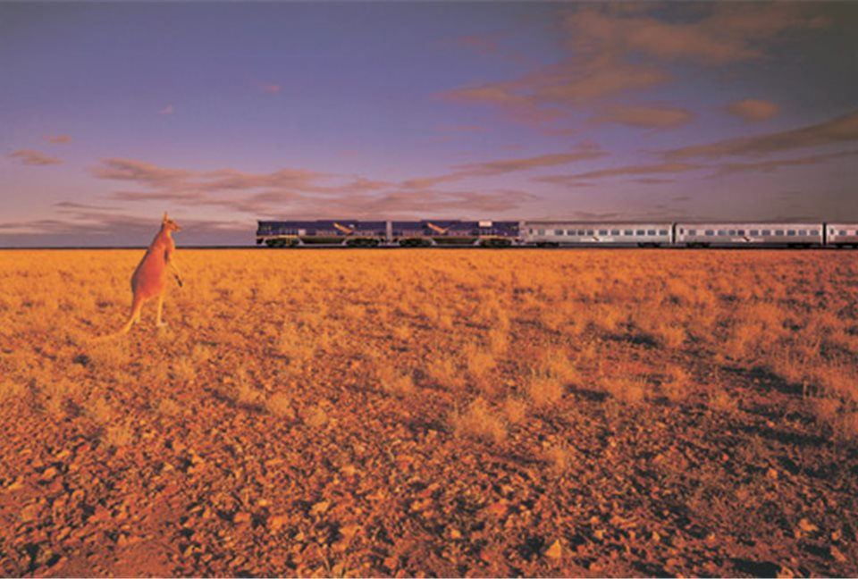 indian pacific roo