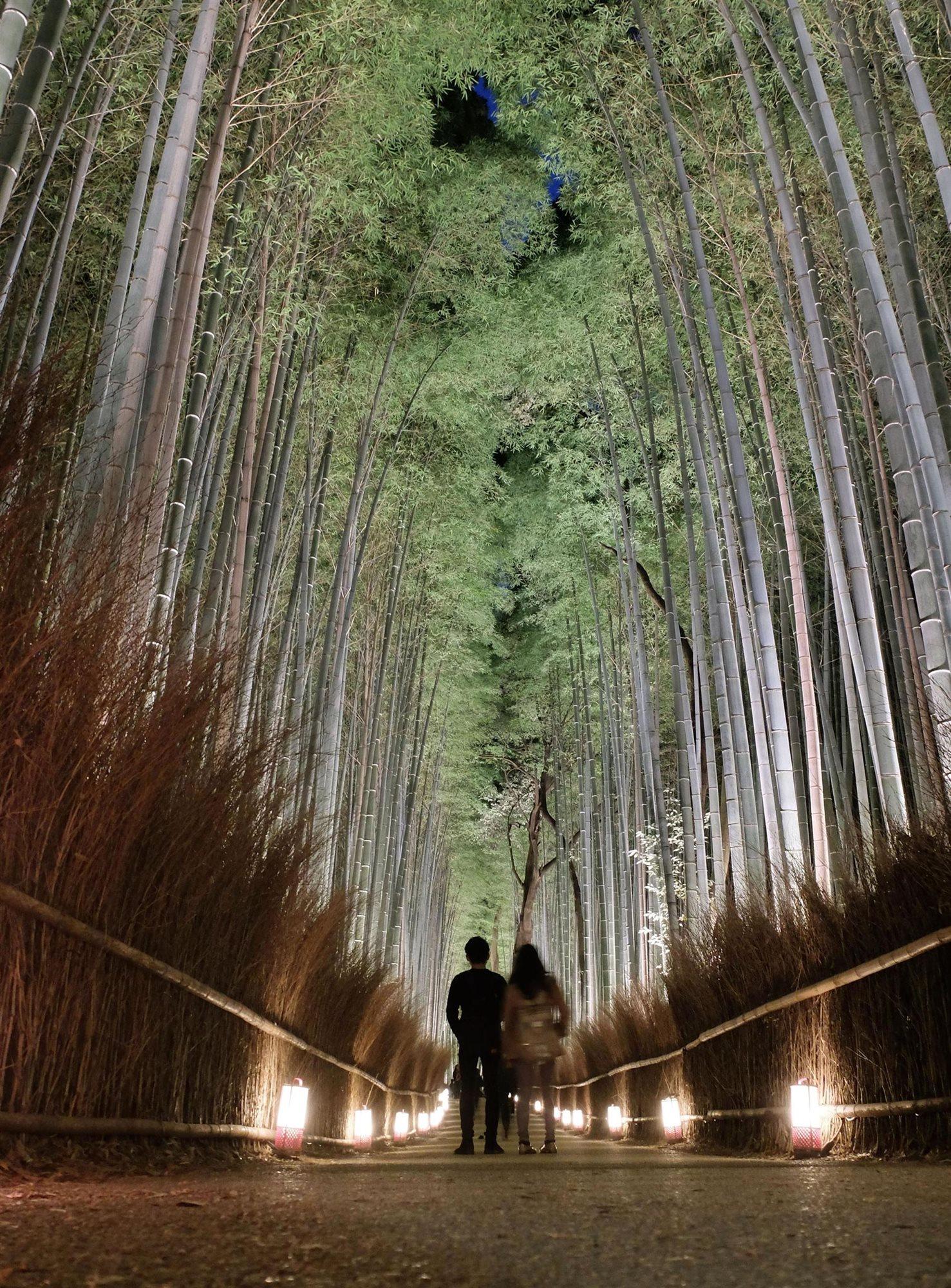 Japon Bajo El Embrujo Del Bosque De Bambu