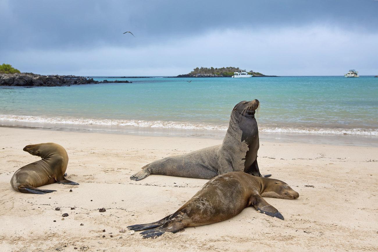 Galápagos. Islas Galápagos, Ecuador