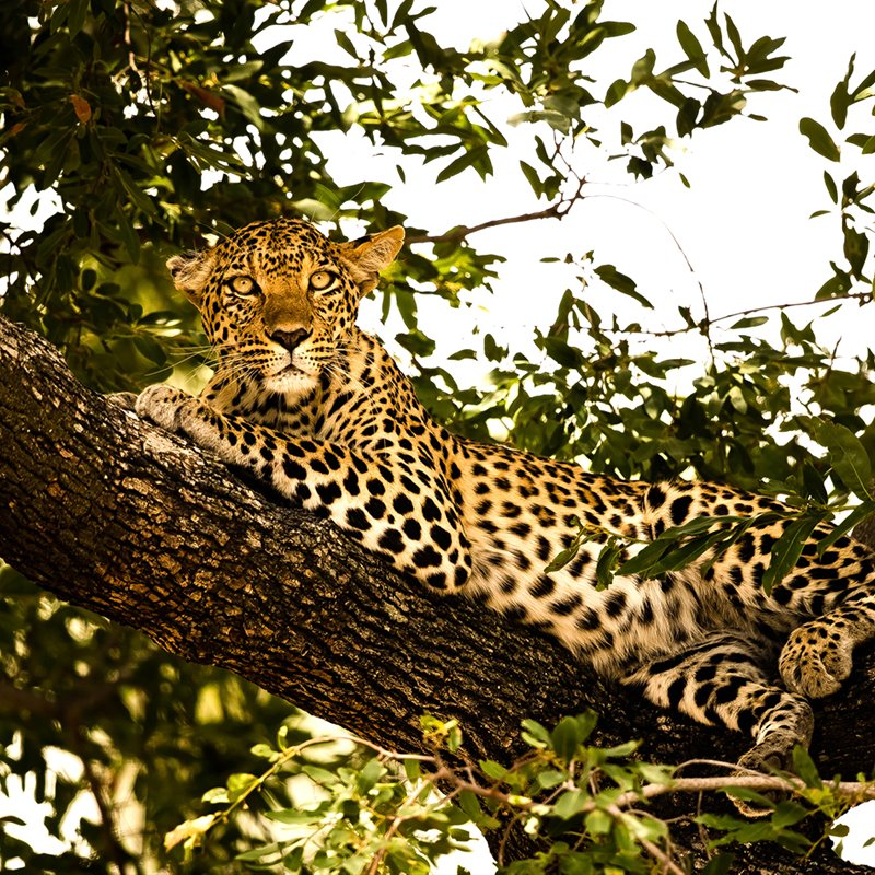 South Luangwa: el safari más alternativo de África