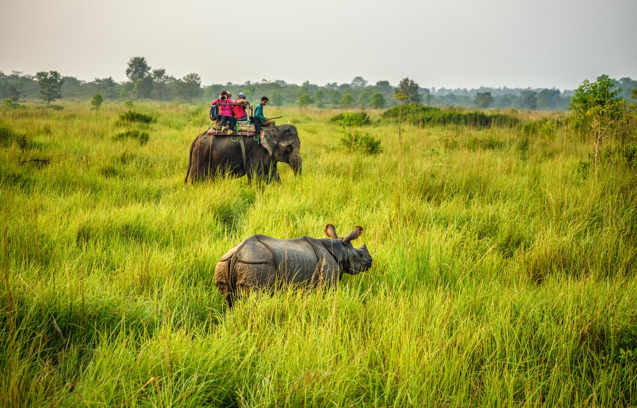 En el #5: Parque Nacional Royal Chitwan