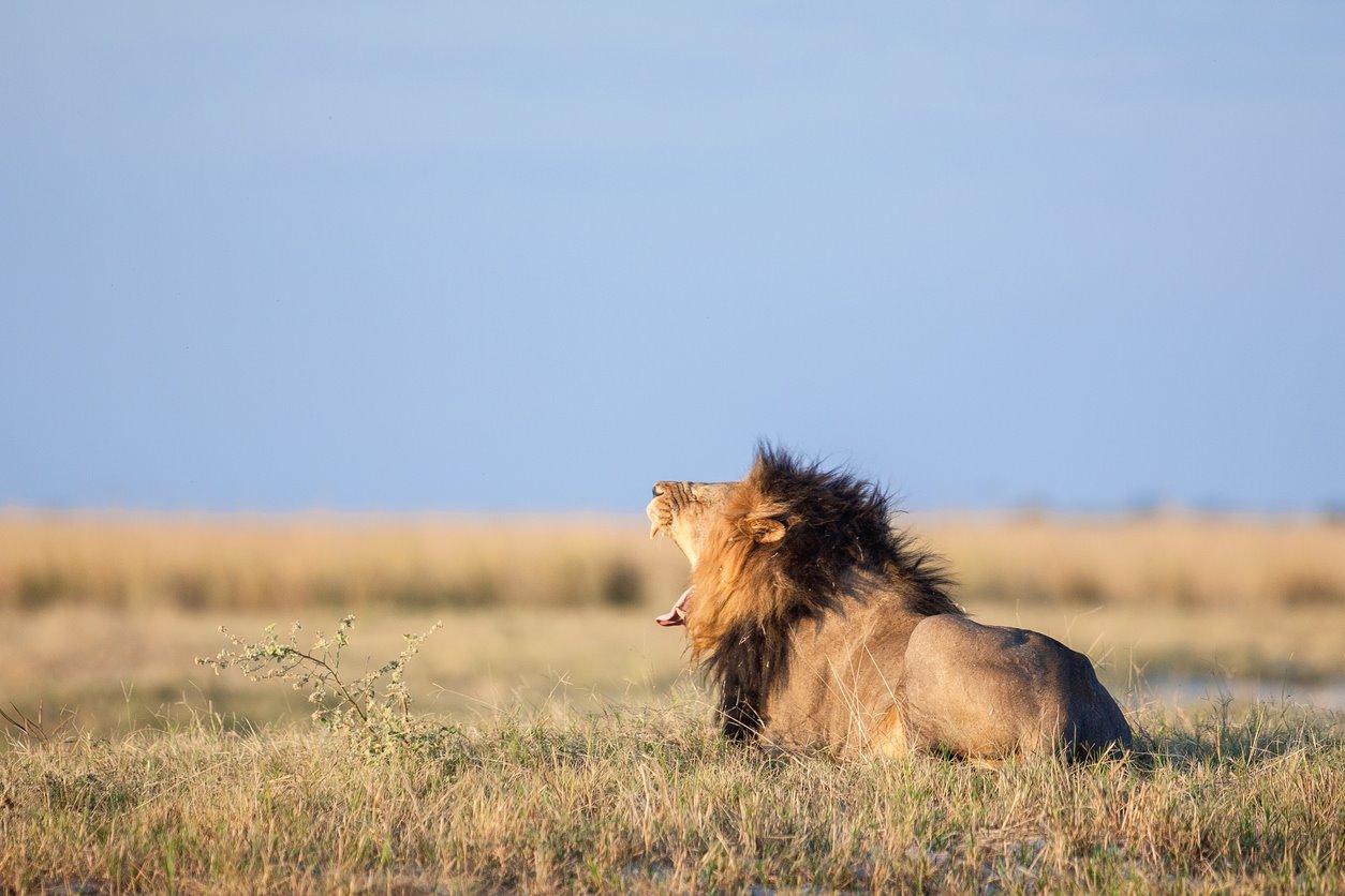 Un safari por Botswana.... Para un safari por Botswana...