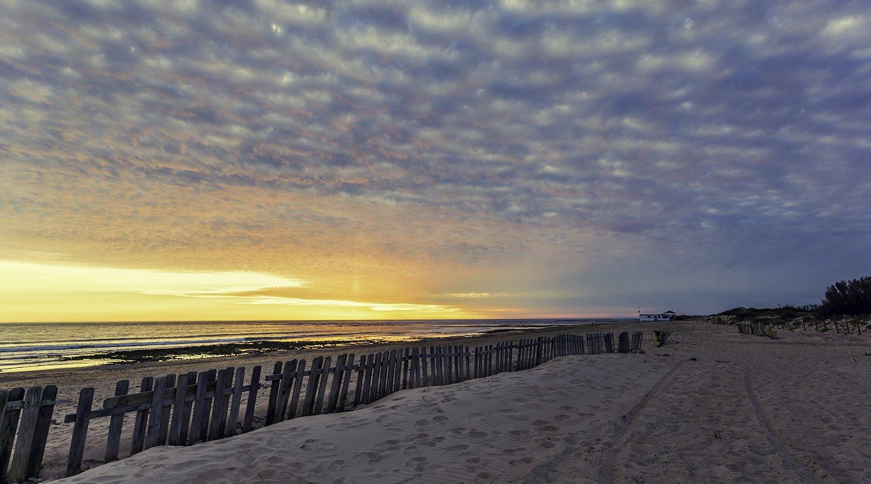 Playa de Camarón. Playa de Camarón (para camuflarse sobre la arena)