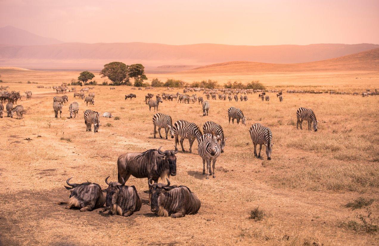 iStock-1039835472. Tanzania