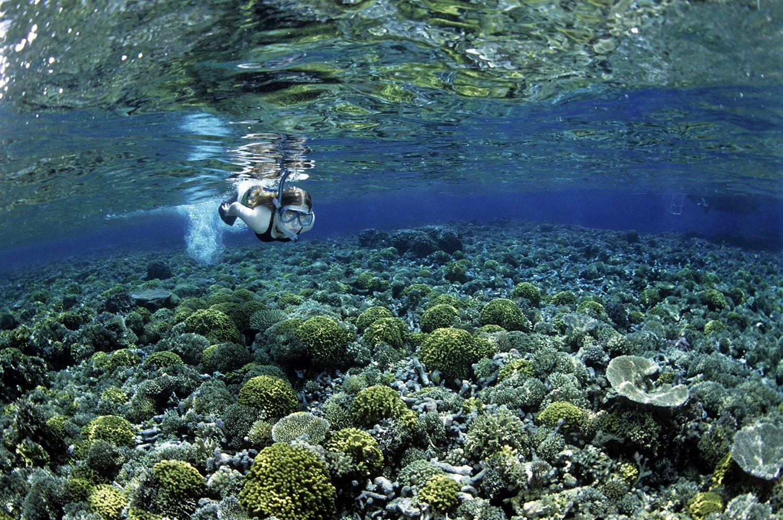 submarinismo. Un jardín submarino
