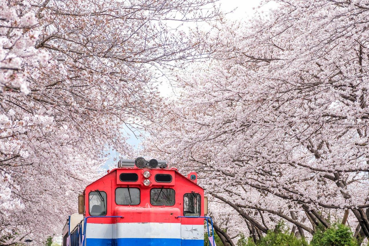 En el #X: Florecer en Jinhae