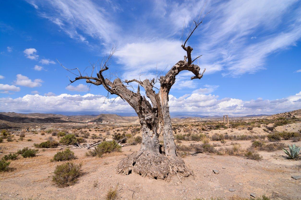iStock-858682076. El desierto de Tabernas