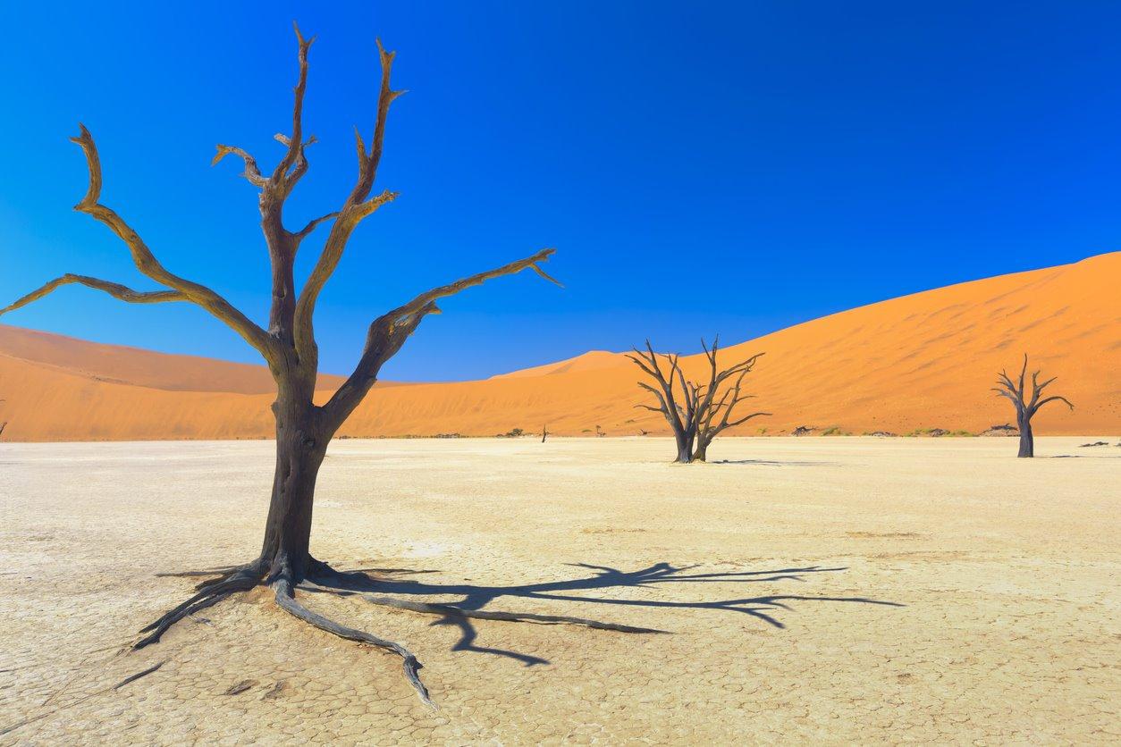 iStock-471582641. El desierto más antiguo del mundo