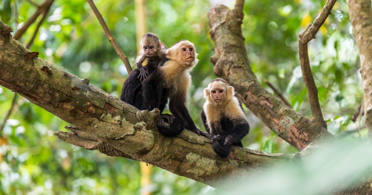 Monos-en-libertad-en-costa-rica_641539ab_1200x630