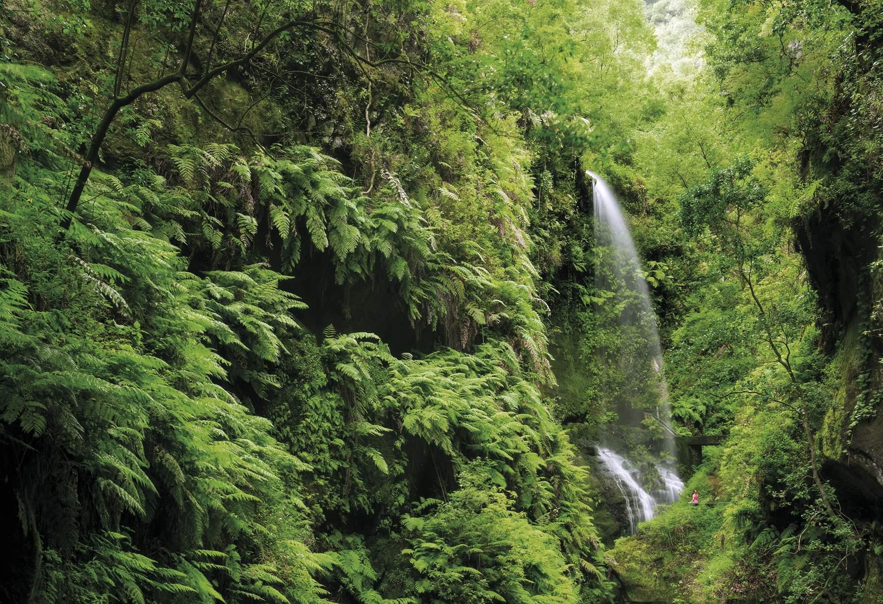 SSD0179. Laurisilva y cascadas