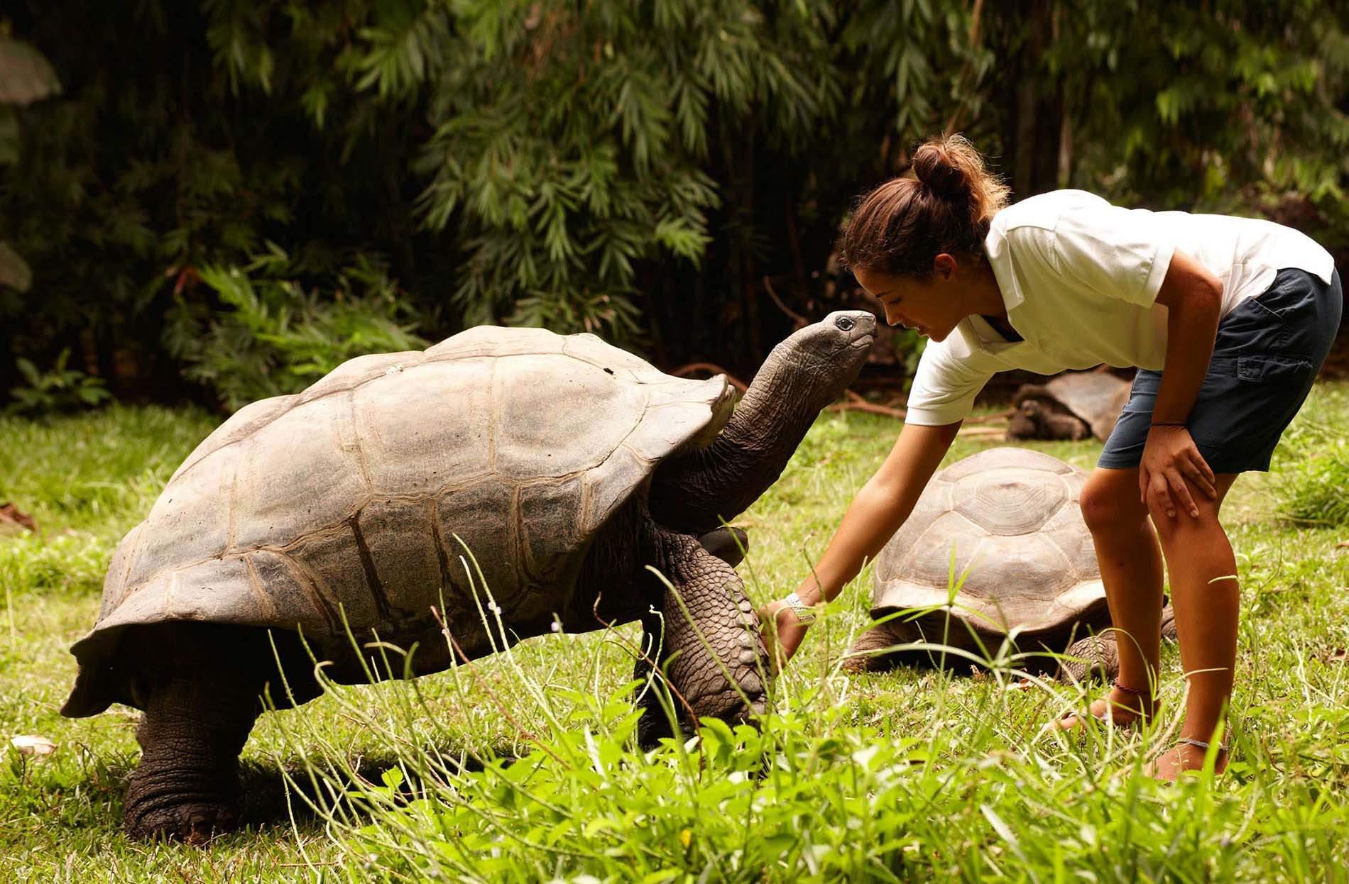 fregate island conservation giant-aldabra-tortoises 5 . Conservación y sostenibilidad