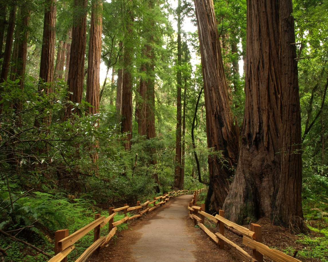iStock-153778909. Giant Forest