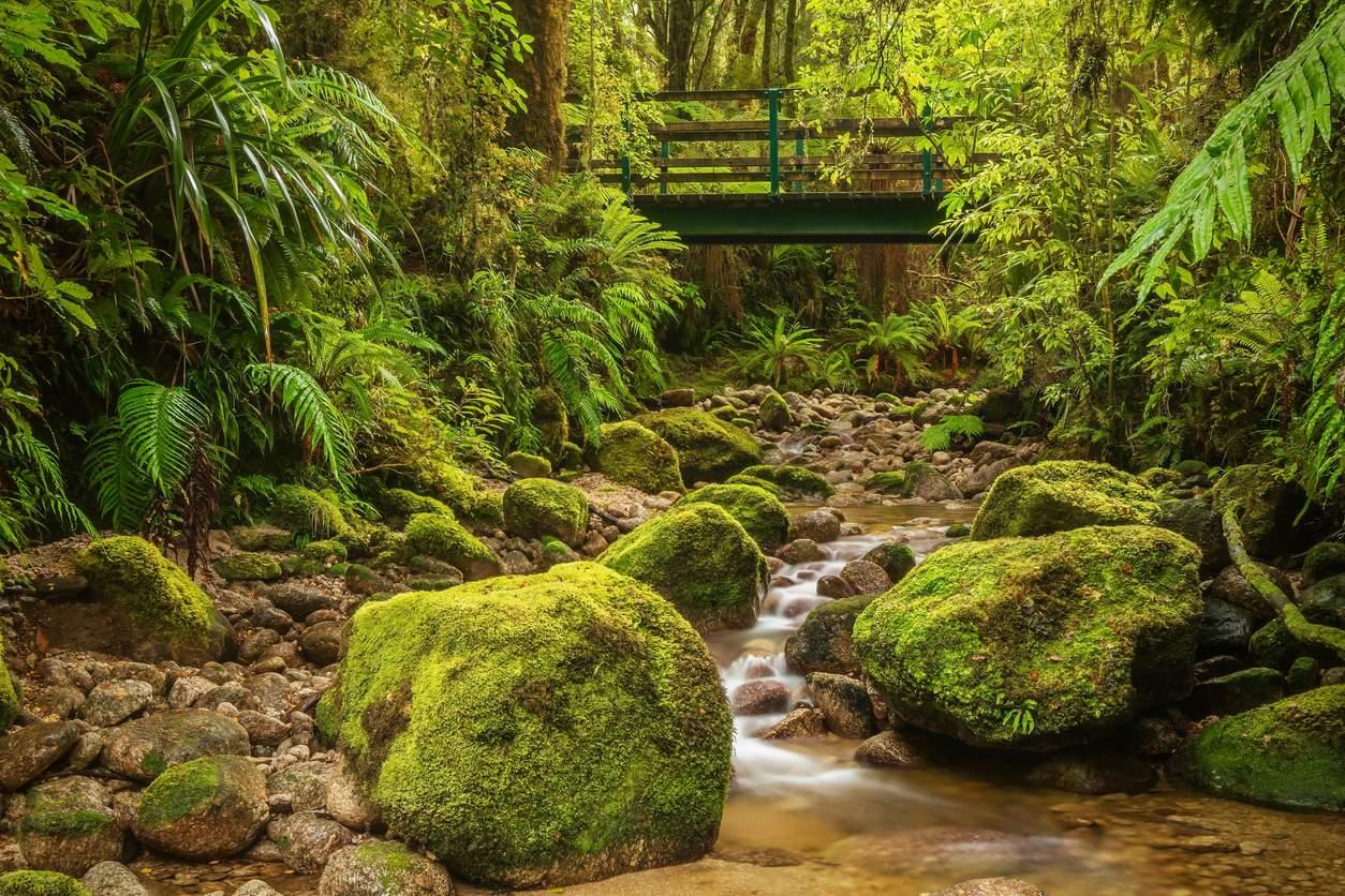 iStock-1257701485. Nueva Zelanda